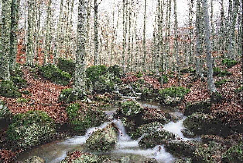 foreste - Amiata (Gr) (Consorzio Forestale dell'Amiata)