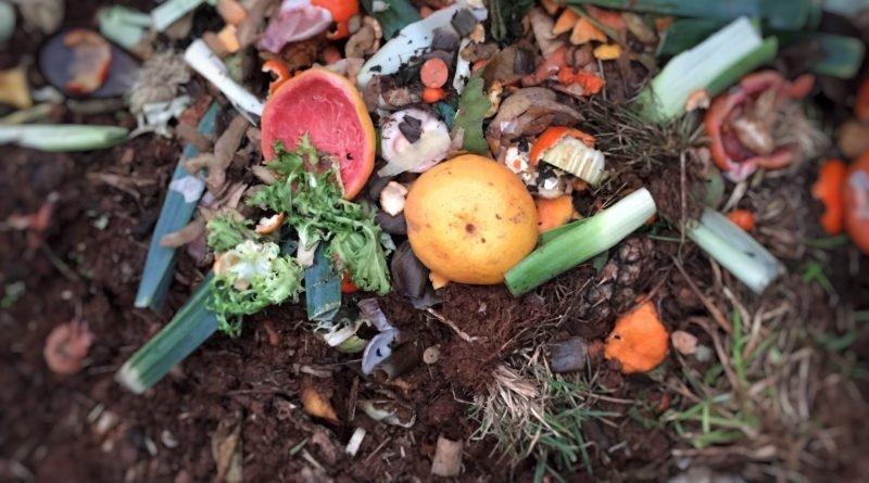 raccolta differenziata dell'umido scarti organici