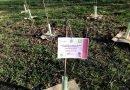 Earth Day, PEFC e Rete Clima regalano 100 alberi a Milano