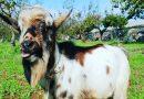 Interventi assistiti con animali e laboratori di sostenibilità: la bio fattoria I Racconti del Carrubo lancia il crowdfunding per completare il progetto