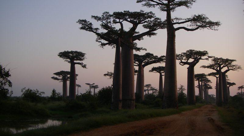 alberi bellezza